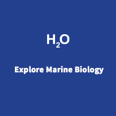Explore Neuroscience & Marine Biology