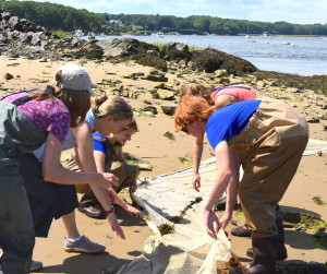 Collecting Specimens Saco Bay